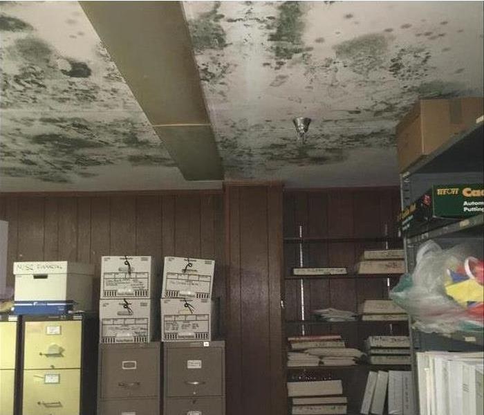 Commercial Mold Remediation In Your Commercial Building